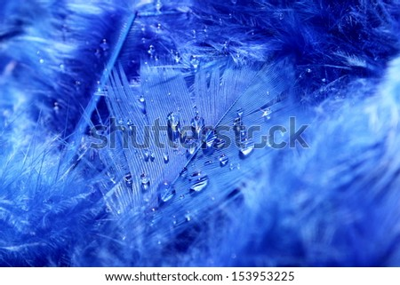 Bright blue feathers with water droplets