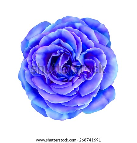Bright Blue Rose Flower, Sexy and beautiful and rose bud isolated on white background. illustration - stock photo