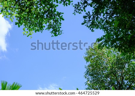 bright blue sky and trees