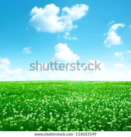Bright blue sky with white clouds over white dandelion field. - stock photo