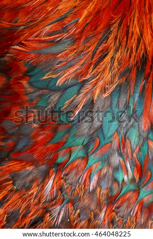 Bright brown feathers  of bird. Colorful rooster close up.