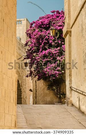 Bright bush in a narrow street - stock photo