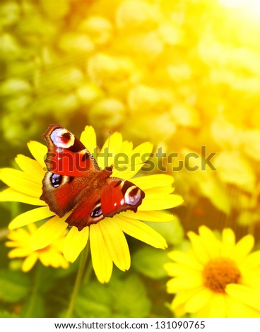 Bright butterfly on yellow flowers - stock photo