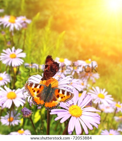 Bright butterflys on lilac flowers - stock photo