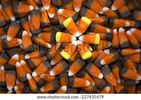 Bright Candy Corn Flower on Dark Candy Corn Background - stock photo