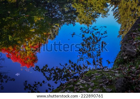 Bright Colored Autumn Leaves Reflection - stock photo