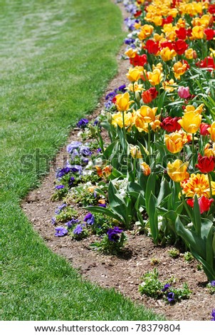 Bright colored red and yellow tulips in a flower garden bordering a green lawn. Copy space on the bottom and left. - stock photo