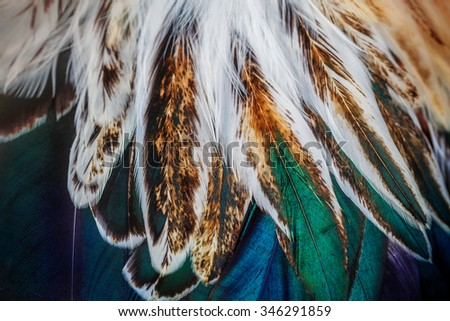 Bright colorful  feather group of some bird - stock photo