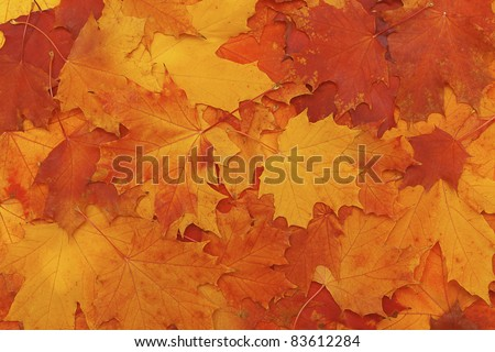 Bright colorful leaves - autumn wallpaper - stock photo