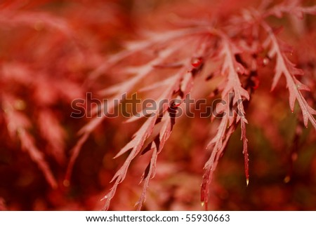 Bright, colorful leaves on a gloomy day in fall. - stock photo