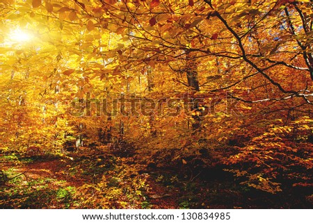 Bright colorful leaves on the branches in the autumn forest. Carpathian, Ukraine, Europe. Beauty world. - stock photo