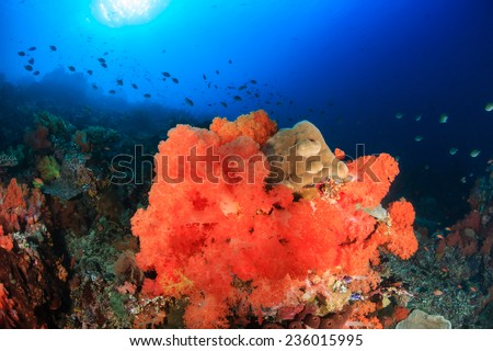 Bright, colorful soft corals on a healthy tropical coral reef - stock photo