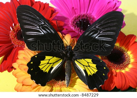 bright colors butterfly - stock photo