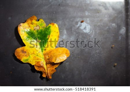 Bright colourful autumn leaf floating in water with ripples