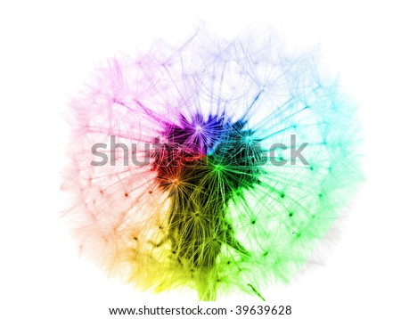 bright dandelion flower in rainbow colors isolated on white - stock photo