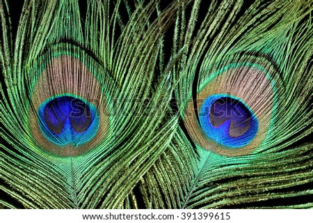 Bright feather of a peacock on a black background - stock photo