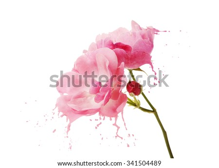 bright flower with pink splashes on black background - stock photo