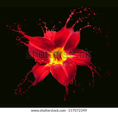 bright flower with red splashes on black background - stock photo