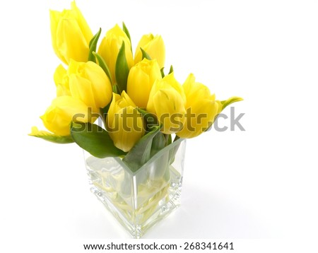 Bright flowering spring tulips in yellow on a vase of glass over white - stock photo