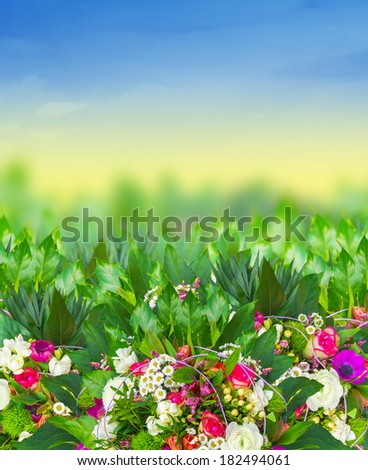 bright flowers in summer garden on background of blue sky - stock photo