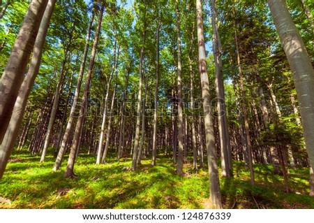 Bright forest at summer in national park angle shot