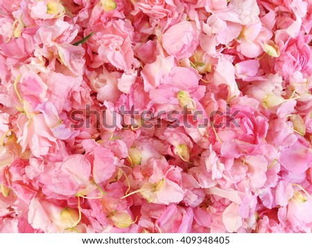 Bright, fresh and colorful of flower petals - stock photo