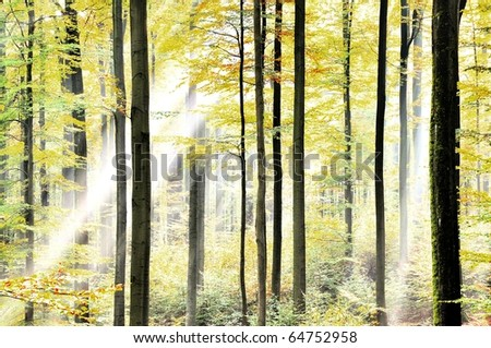 Bright fresh forest with sunbeams - stock photo