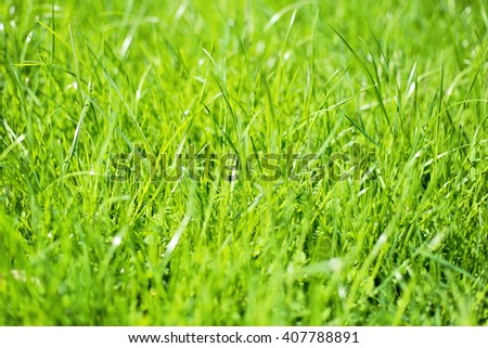 Bright fresh green grass spring meadow background. Sunny green grass texture.  - stock photo