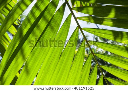 Bright fresh palm tree leaves, macro photo with strong sun back light - stock photo