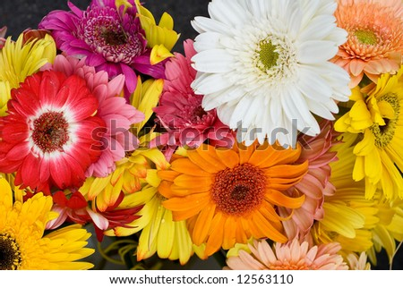 Bright Gerber Daisy Bouquet - stock photo