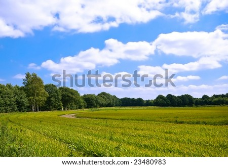 bright green agriculture farmland with cloudy blue sky
