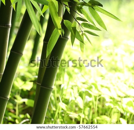 Bright green bamboo forest - stock photo