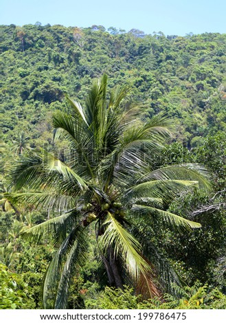 bright green coconut palm tree on the background of the jungle
