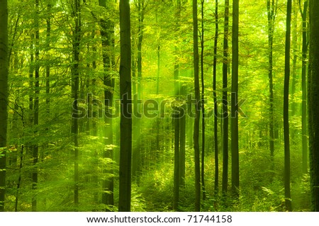Bright green forest in springtime - stock photo