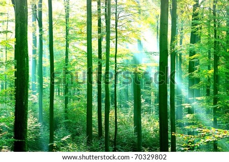 Bright green forest with sunbeams - stock photo