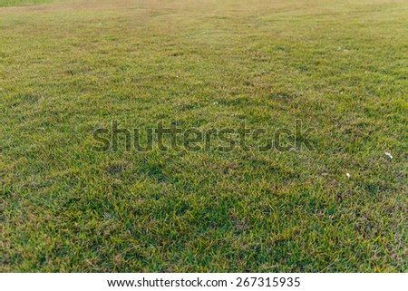 Bright green grass background, shallow DoF photo - stock photo