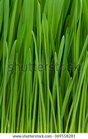 Bright green grass in the organic soil close-up - stock photo