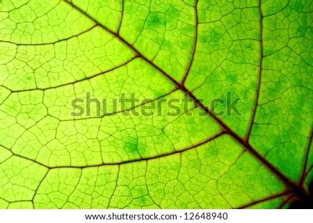 bright green leaf horizontal - stock photo