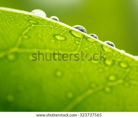Bright green leaf photo with water drops in the morning. Shallow depth of field  - stock photo