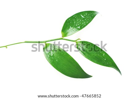 bright green leaf with water drop - stock photo