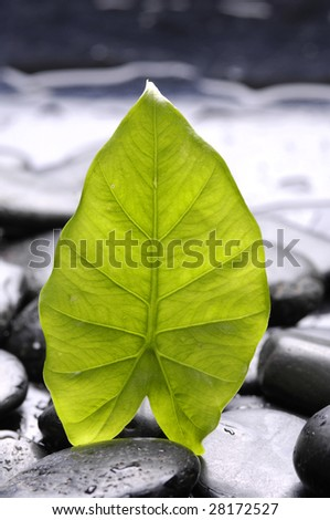 bright green leaf with water drops - stock photo