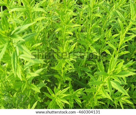 Bright green leaves outside. Summer background texture