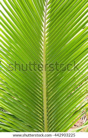 Bright Green palm tree leaf texture use for background - stock photo