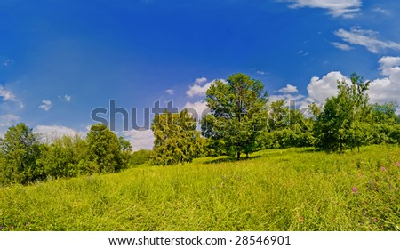 Bright high resolution panoramic shot of a summer meadow and edge of forest - stock photo