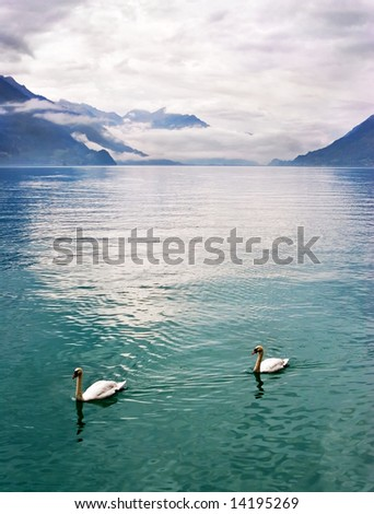Bright lake and swans in Switzerland mountains - stock photo