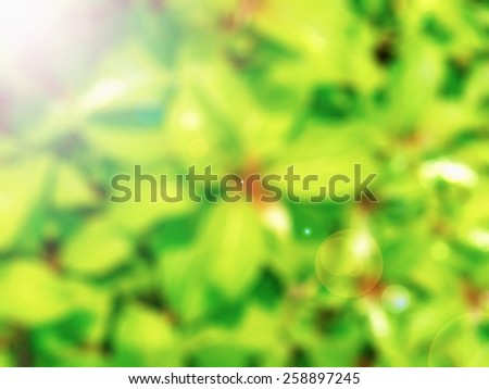 Bright leaf plants in garden,abstract blur background,colorful, blurred, wallpaper,