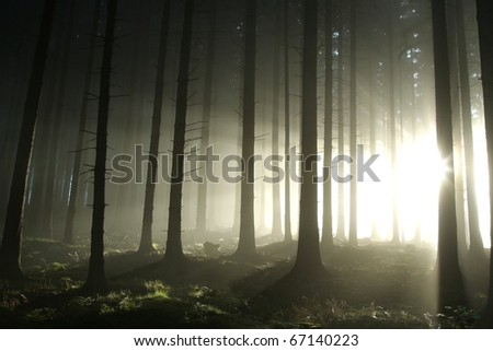 Bright light entering coniferous forest on a misty autumn morning. - stock photo