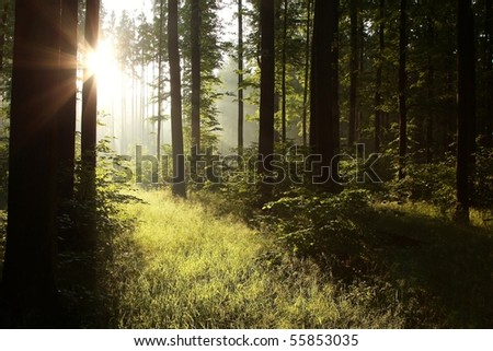 Bright light falling into the dark forest. Photo taken in June. - stock photo