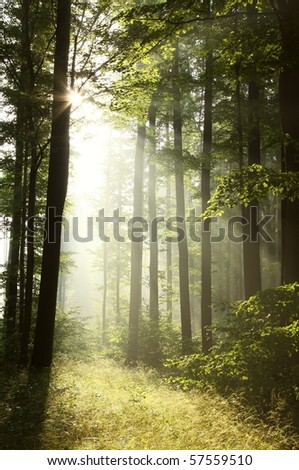 Bright light falling into the misty forest at dawn. Photo taken in July. - stock photo