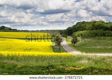 bright light in green grass and yellow flowers in summer field with blue cloudy sky background - stock photo